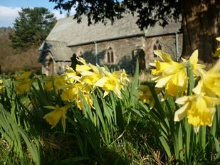Daffodils in Patterdale Churchyard